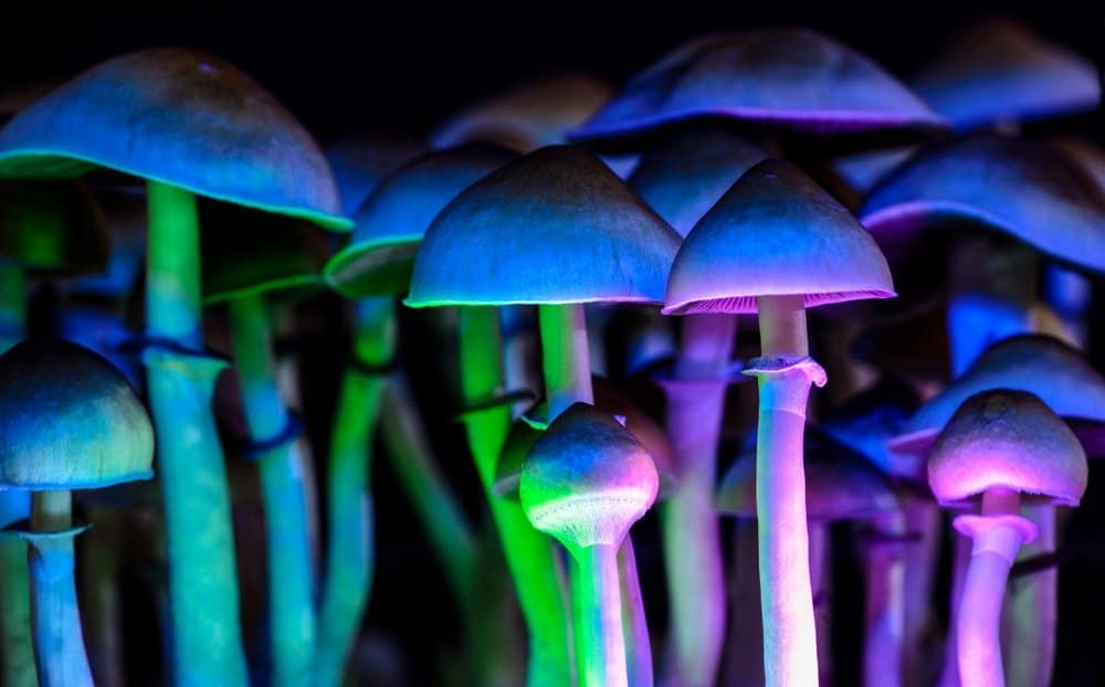 How Long Do Shrooms Stay in Your System?